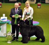 King-of-helluland-feel-the-win-res-bis-crufts-2012